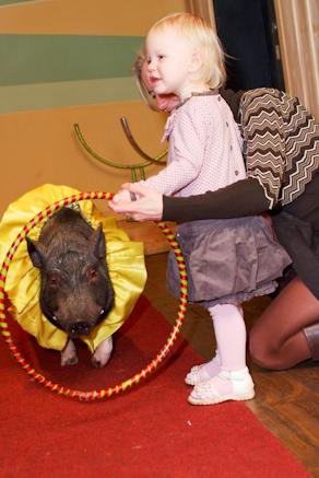 Животные на детский праздник